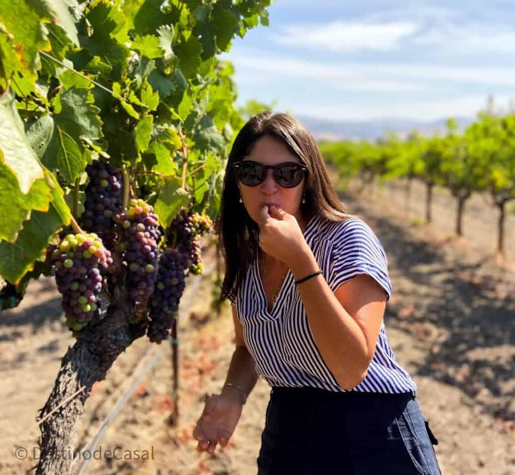 Experimentando uva no Napa Valley